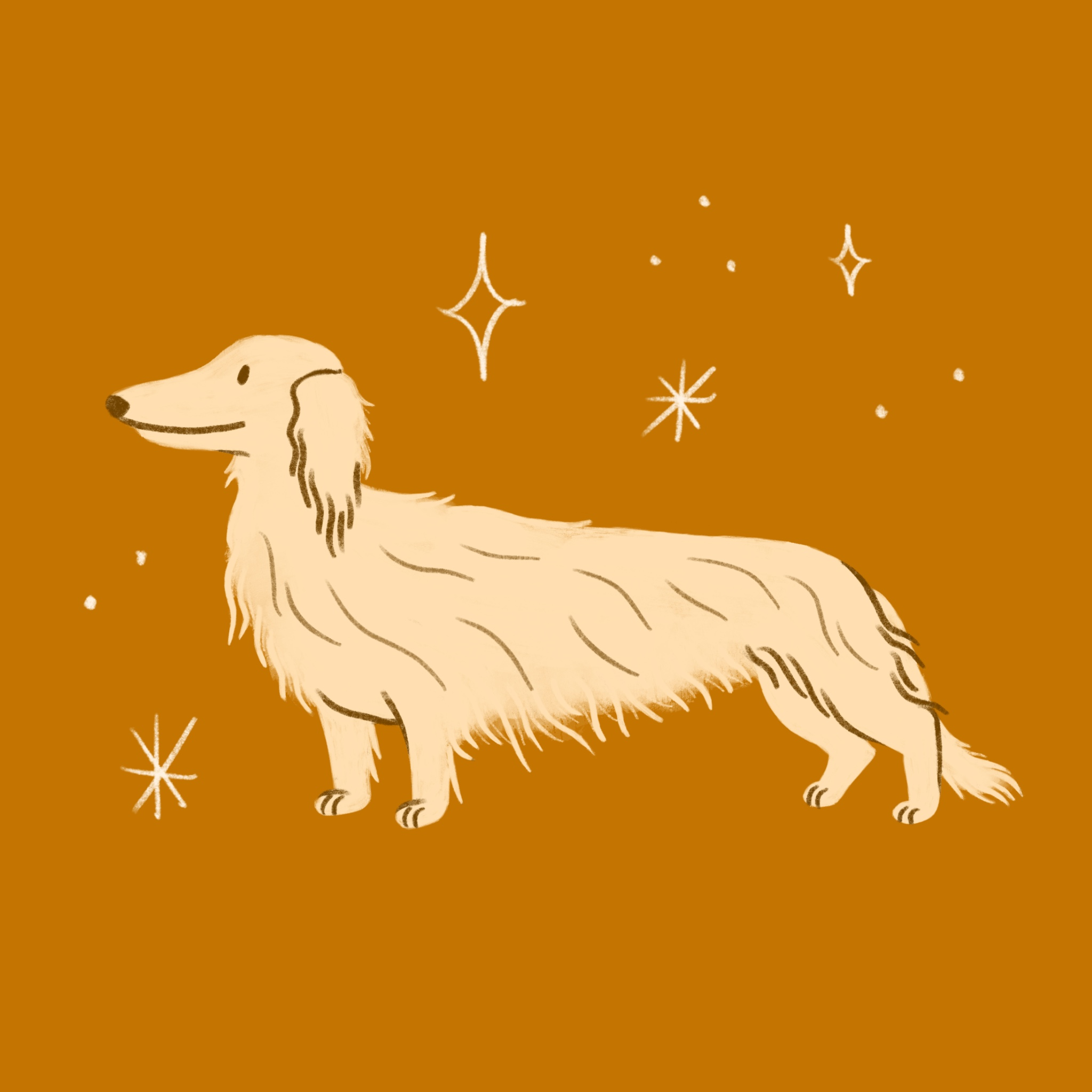 An illustration of a long haired Dachshund dog