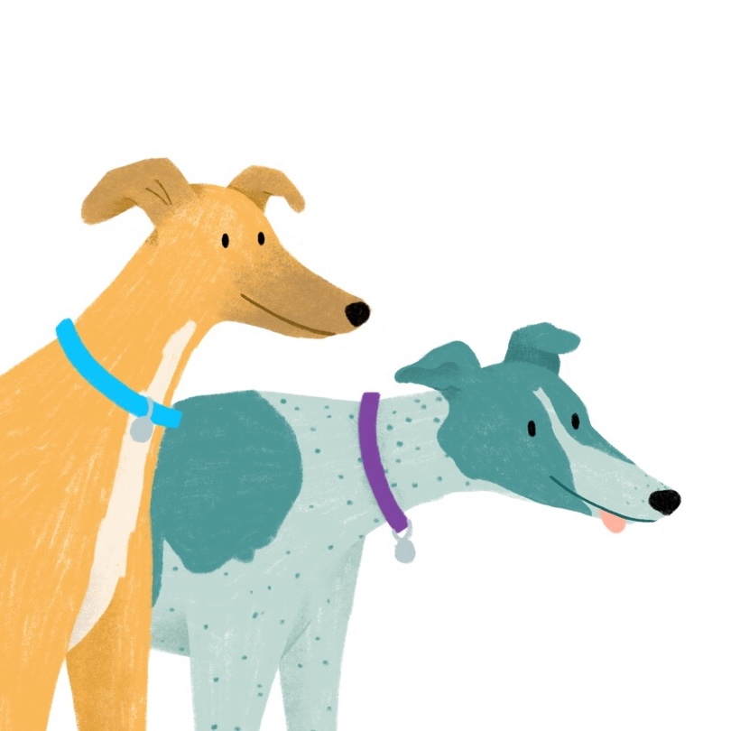 illustration of two greyhounds