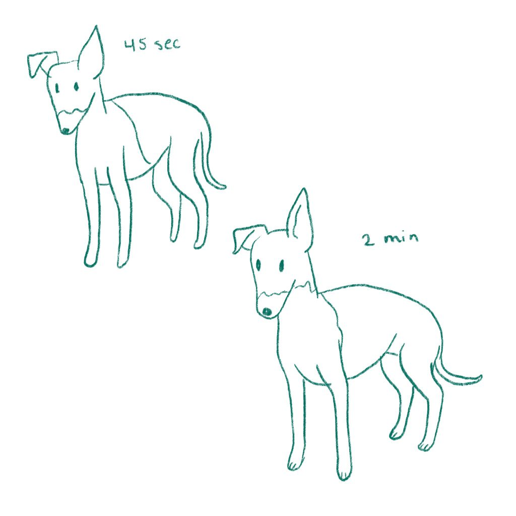 Quick sketches of italian greyhounds