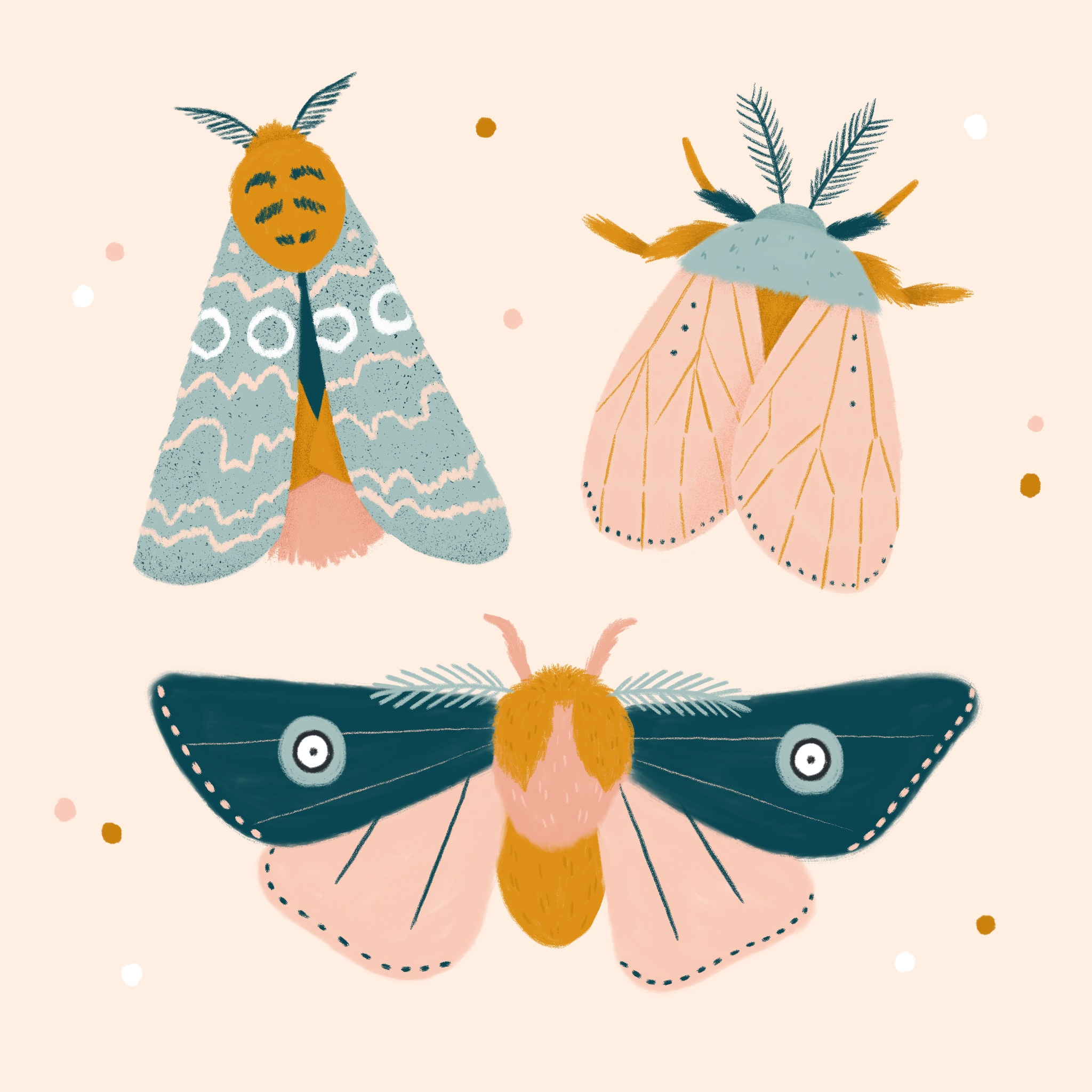 An illustration of three moths with different wing patterns
