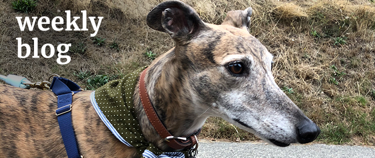 "The words ""weekly blog"" next to an adorable greyhound wearing a homemade bandana"